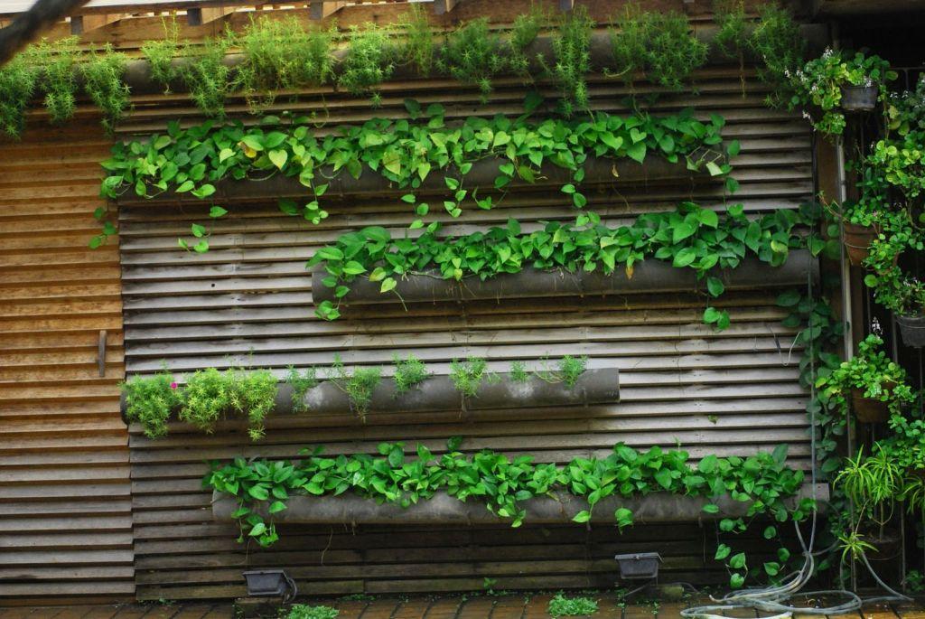 membuat taman vertikal di rumah desain taman vertikal di tembok rumah